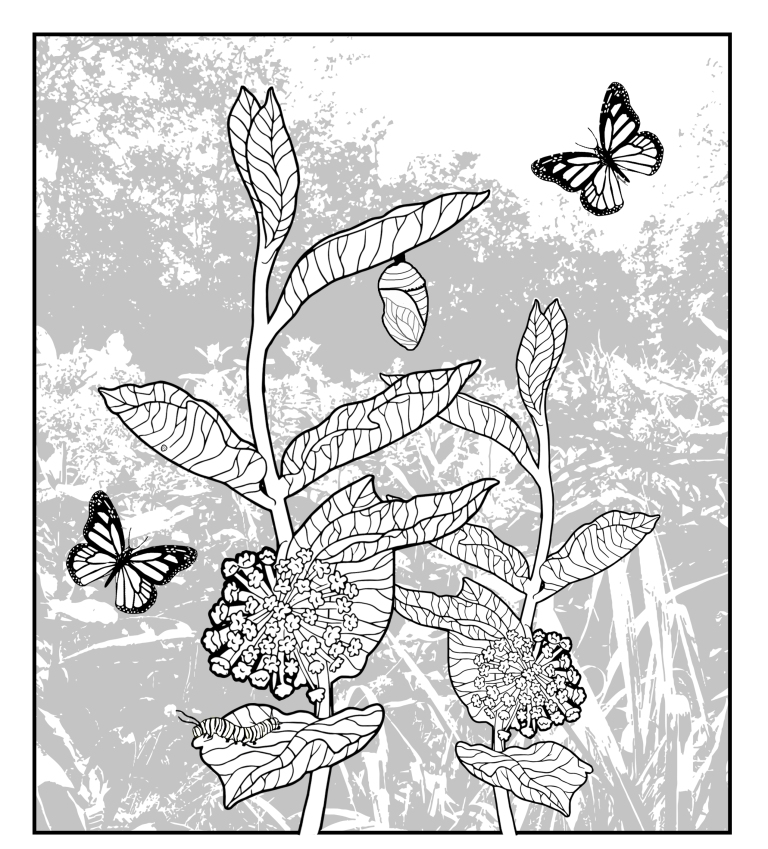 Monarch_Coloring_Sheet